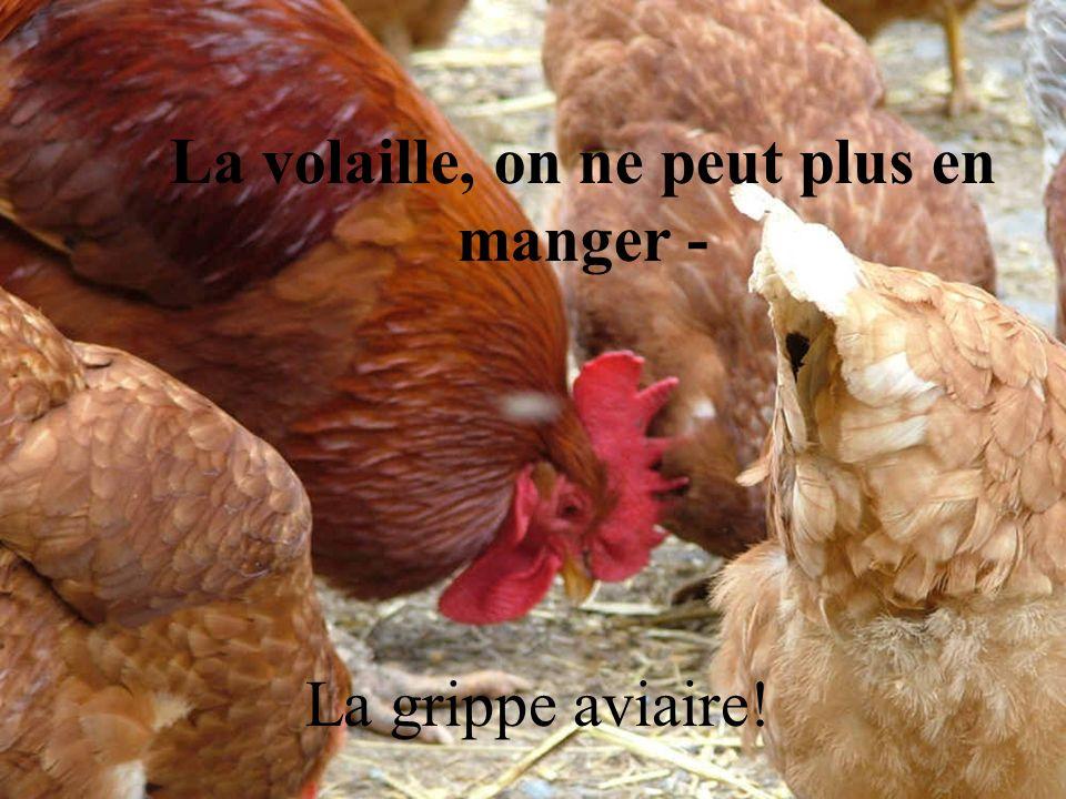 La volaille, on ne peut plus en manger - La grippe aviaire!