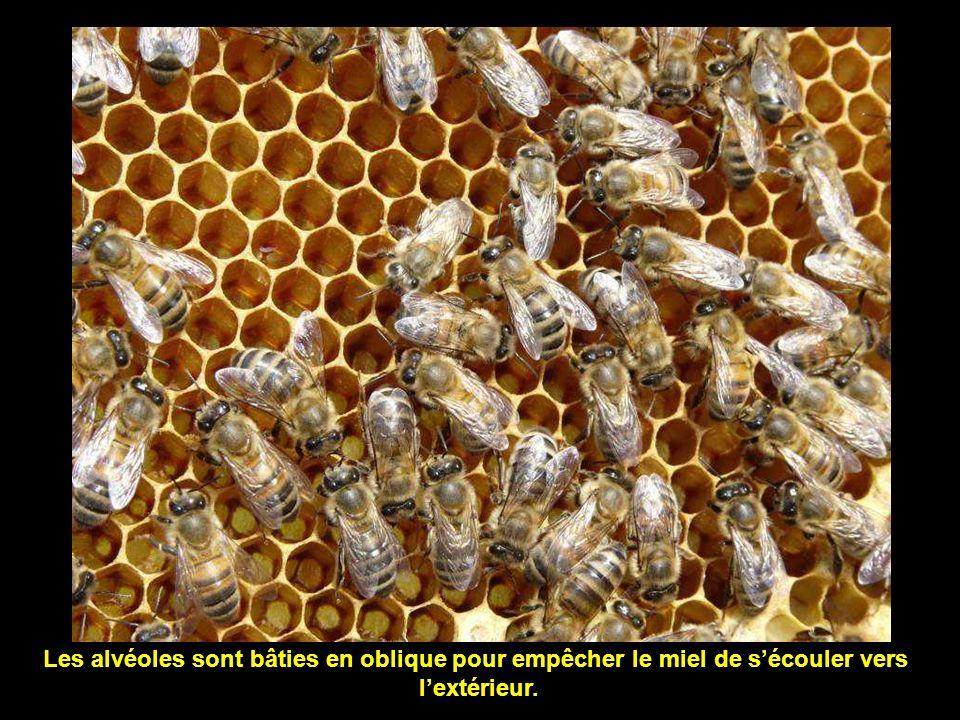 Alvéoles remplies de miel.