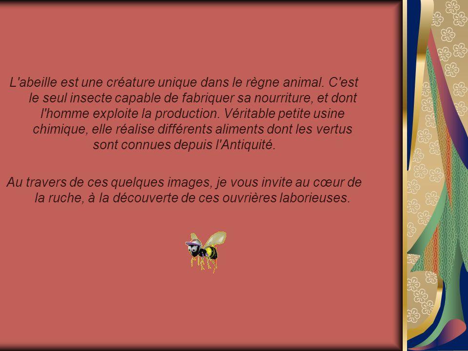 Visite de la ruche Présenté par le site Mespps.com Mespps.com Amusez-vous avec vos amis en leur envoyant nos pps par e-mail.