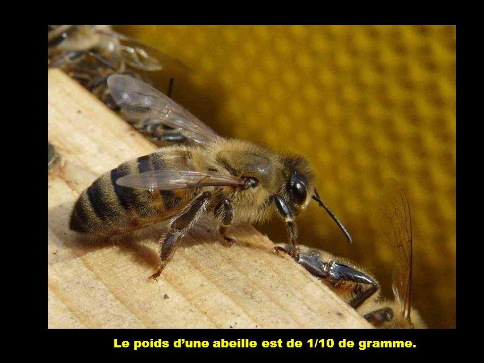L'abeille est une créature unique dans le règne animal. C'est le seul insecte capable de fabriquer sa nourriture, et dont l'homme exploite la producti