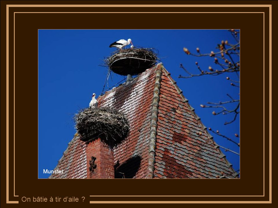 On saménage un nid douillet …. Munster