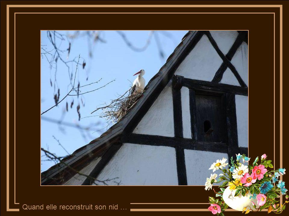 Quand elle reconstruit son nid …