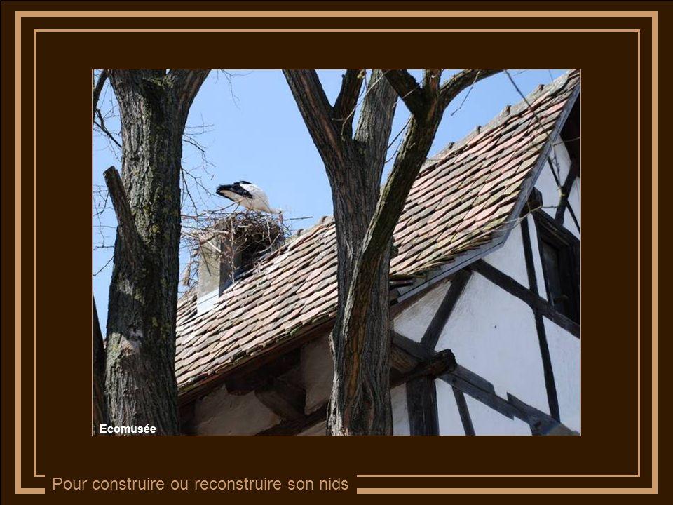 Pour construire ou reconstruire son nids Ecomusée