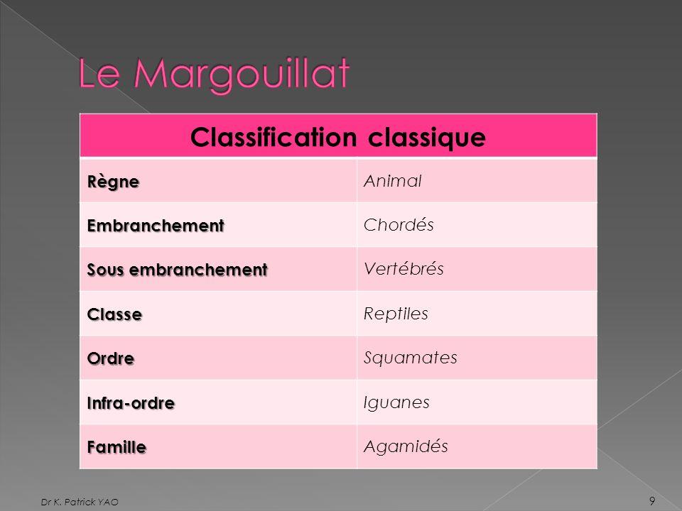 Classification classiqueRègne Animal Embranchement Chordés Sous embranchement Vertébrés Classe Reptiles Ordre Squamates Infra-ordre Iguanes Famille Ag