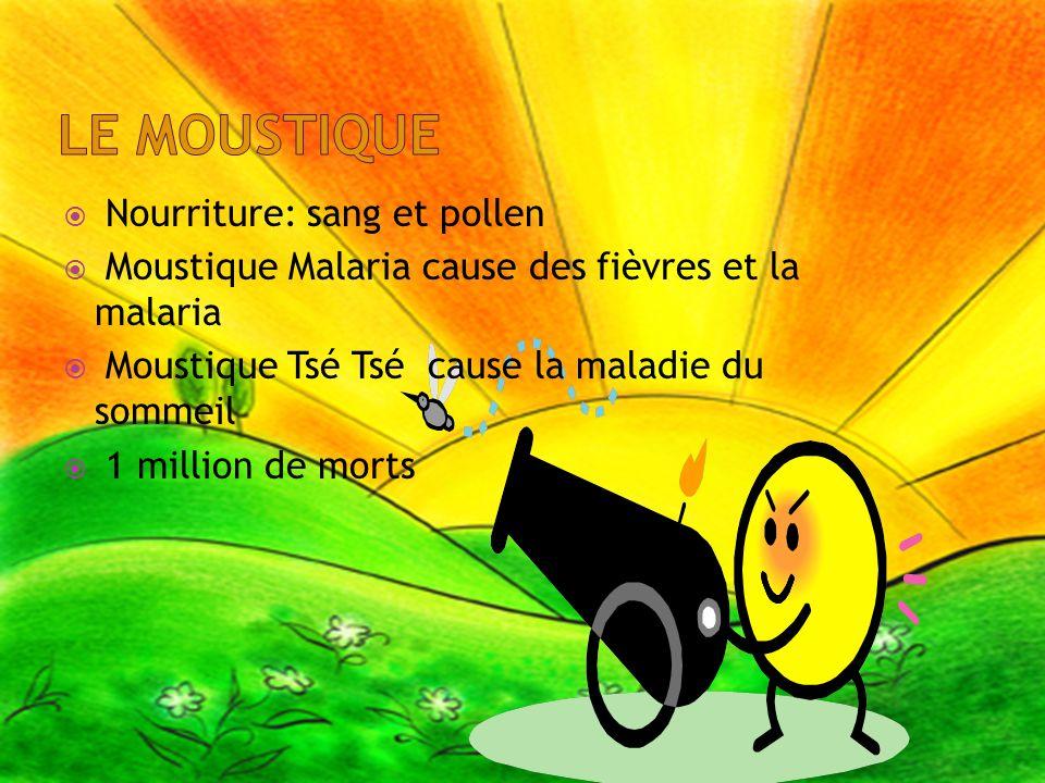 Nourriture: sang et pollen Moustique Malaria cause des fièvres et la malaria Moustique Tsé Tsé cause la maladie du sommeil 1 million de morts