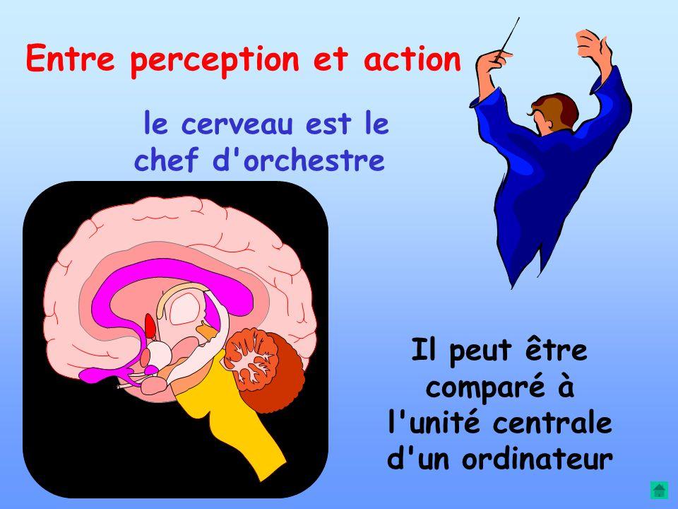 Toutes les formes d'actions : Manipulations Paroles locomotion Peuvent fonctionner séparément ou en synergie dans le cadre de tâches complexes
