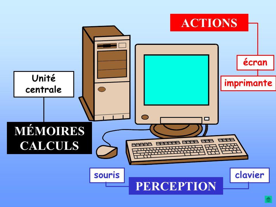 Entre perception et action le cerveau est le chef d'orchestre Il peut être comparé à l'unité centrale d'un ordinateur