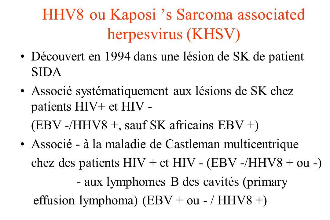 HHV8 ou Kaposi s Sarcoma associated herpesvirus (KHSV) Découvert en 1994 dans une lésion de SK de patient SIDA Associé systématiquement aux lésions de