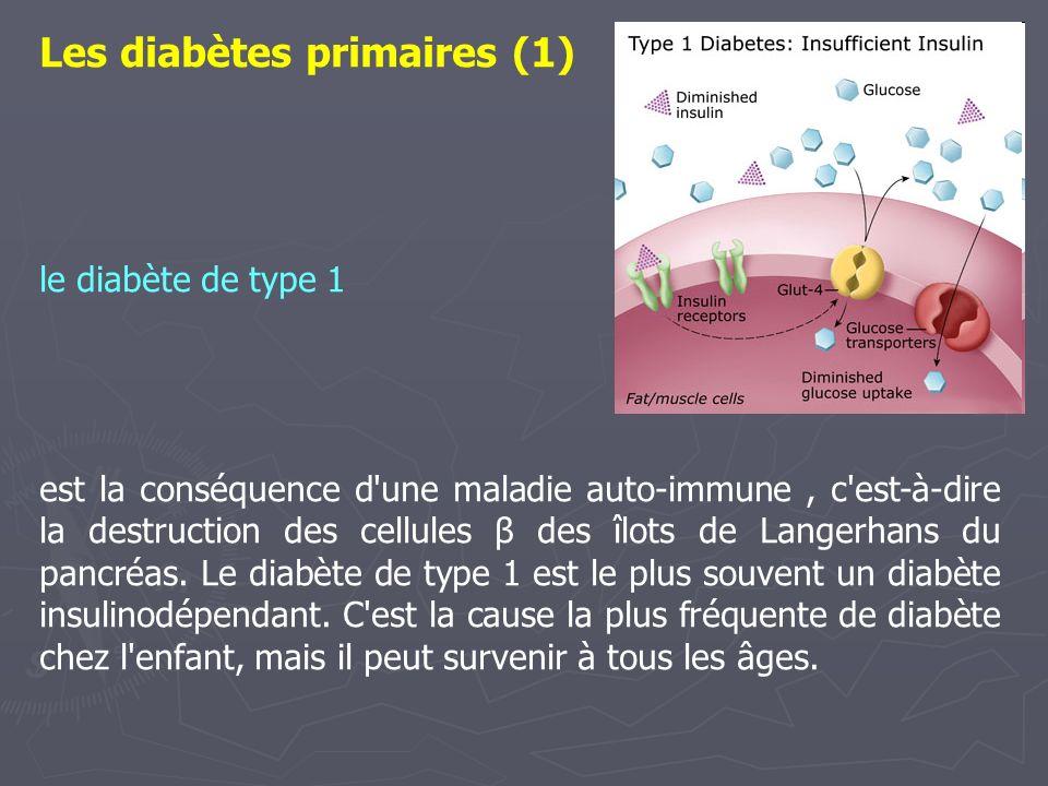 Les diabètes primaires (1) le diabète de type 1 est la conséquence d'une maladie auto-immune, c'est-à-dire la destruction des cellules β des îlots de