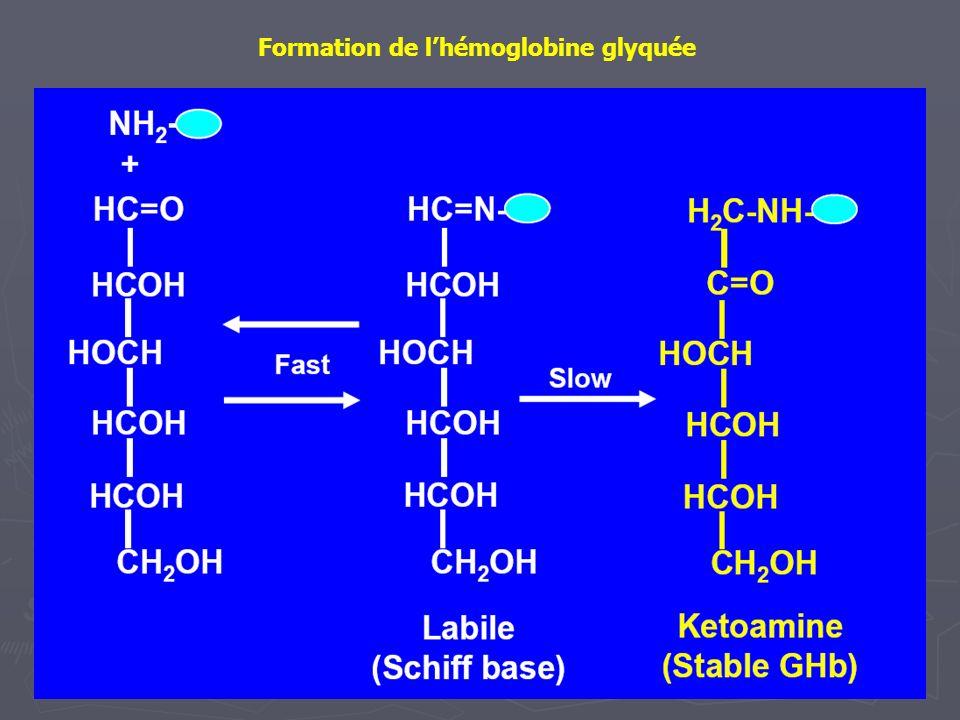 Formation de lhémoglobine glyquée