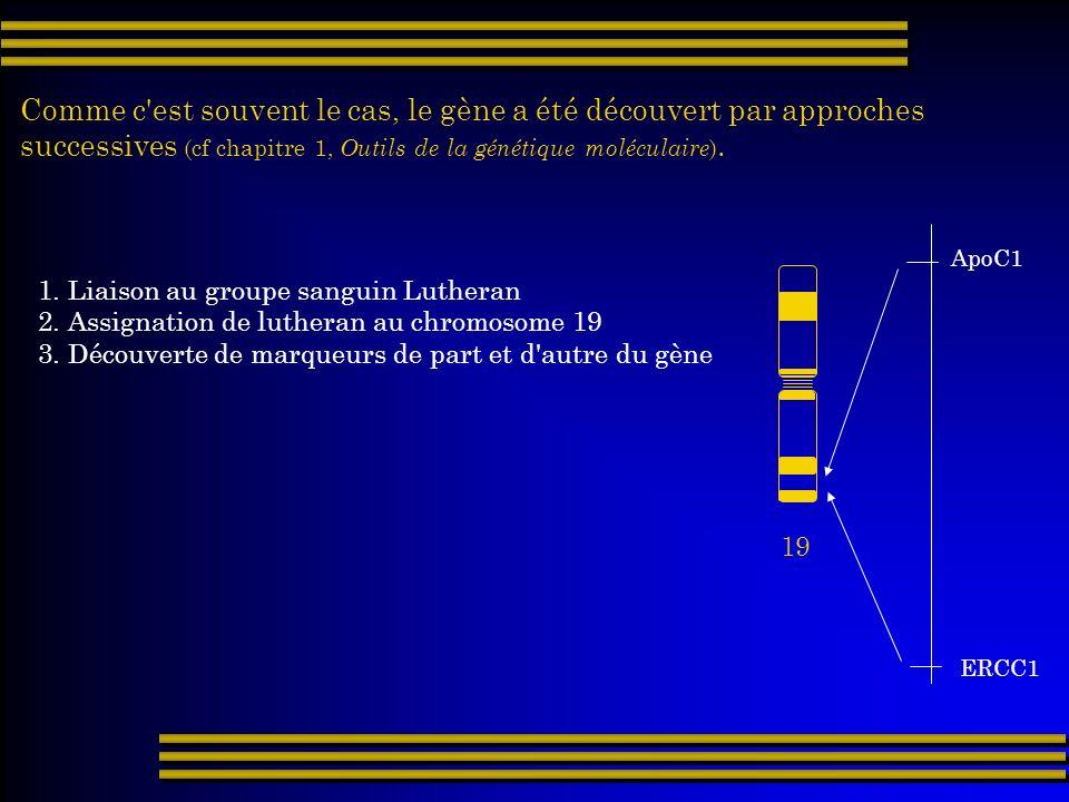 Comme c'est souvent le cas, le gène a été découvert par approches successives (cf chapitre 1, Outils de la génétique moléculaire ). 19 1. Liaison au g