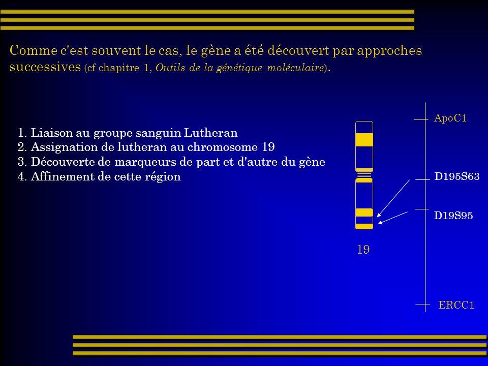 Comme c'est souvent le cas, le gène a été découvert par approches successives (cf chapitre 1, Outils de la génétique moléculaire ). 19 ApoC1 ERCC1 1.