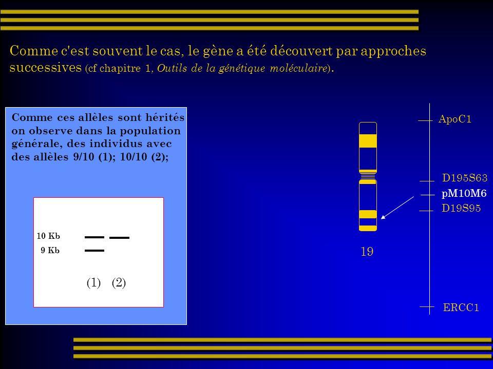 Comme c'est souvent le cas, le gène a été découvert par approches successives (cf chapitre 1, Outils de la génétique moléculaire ). 19 ApoC1 ERCC1 D19