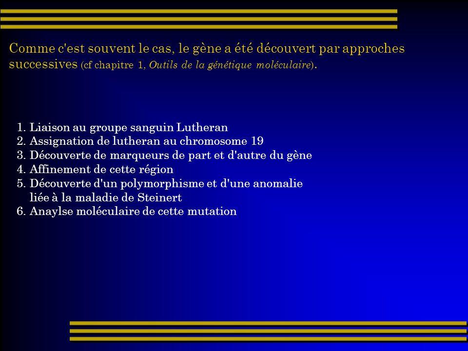 Comme c'est souvent le cas, le gène a été découvert par approches successives (cf chapitre 1, Outils de la génétique moléculaire ). 1. Liaison au grou