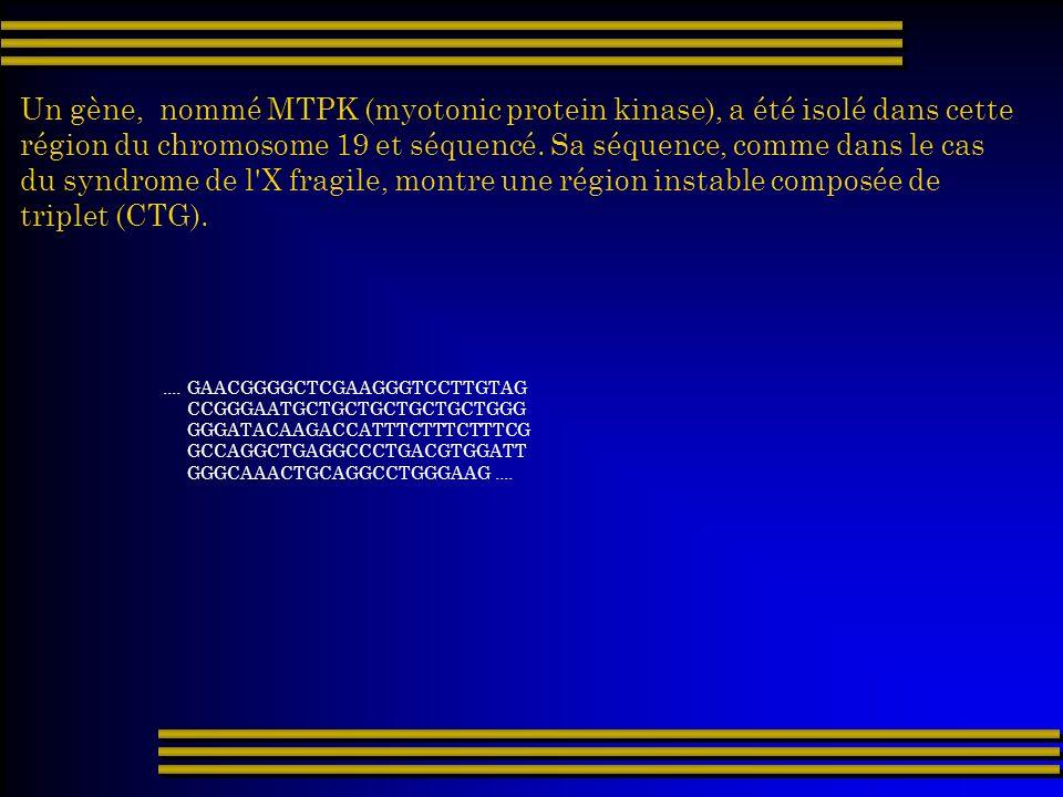 Un gène, nommé MTPK (myotonic protein kinase), a été isolé dans cette région du chromosome 19 et séquencé. Sa séquence, comme dans le cas du syndrome