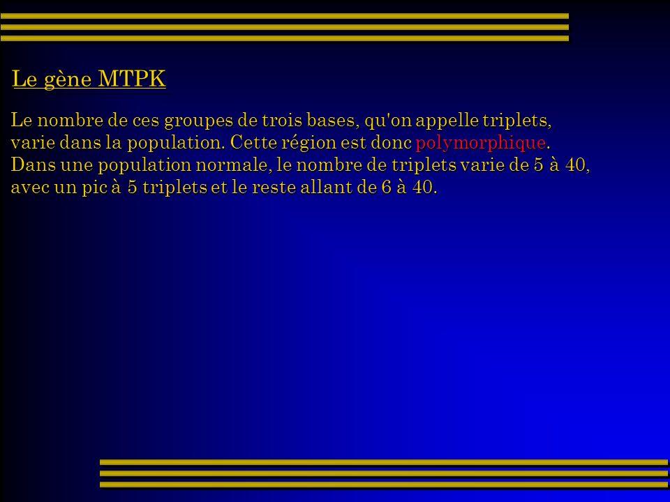 Le nombre de ces groupes de trois bases, qu'on appelle triplets, varie dans la population. Cette région est donc polymorphique. Dans une population no