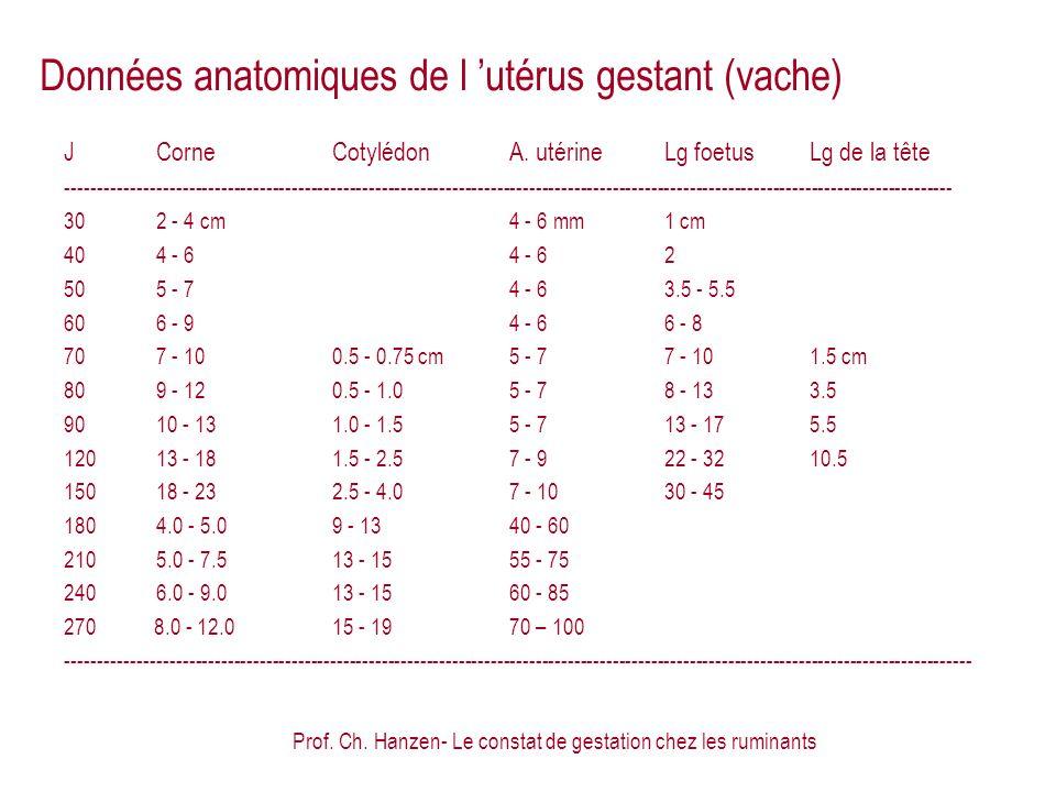 Prof. Ch. Hanzen- Le constat de gestation chez les ruminants Données anatomiques de l utérus gestant (vache) JCorneCotylédonA. utérineLg foetusLg de l