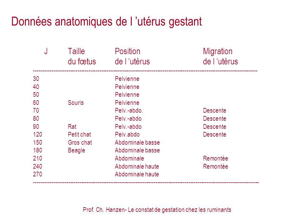 Prof. Ch. Hanzen- Le constat de gestation chez les ruminants Données anatomiques de l utérus gestant JTaillePositionMigration du fœtusde l utérusde l