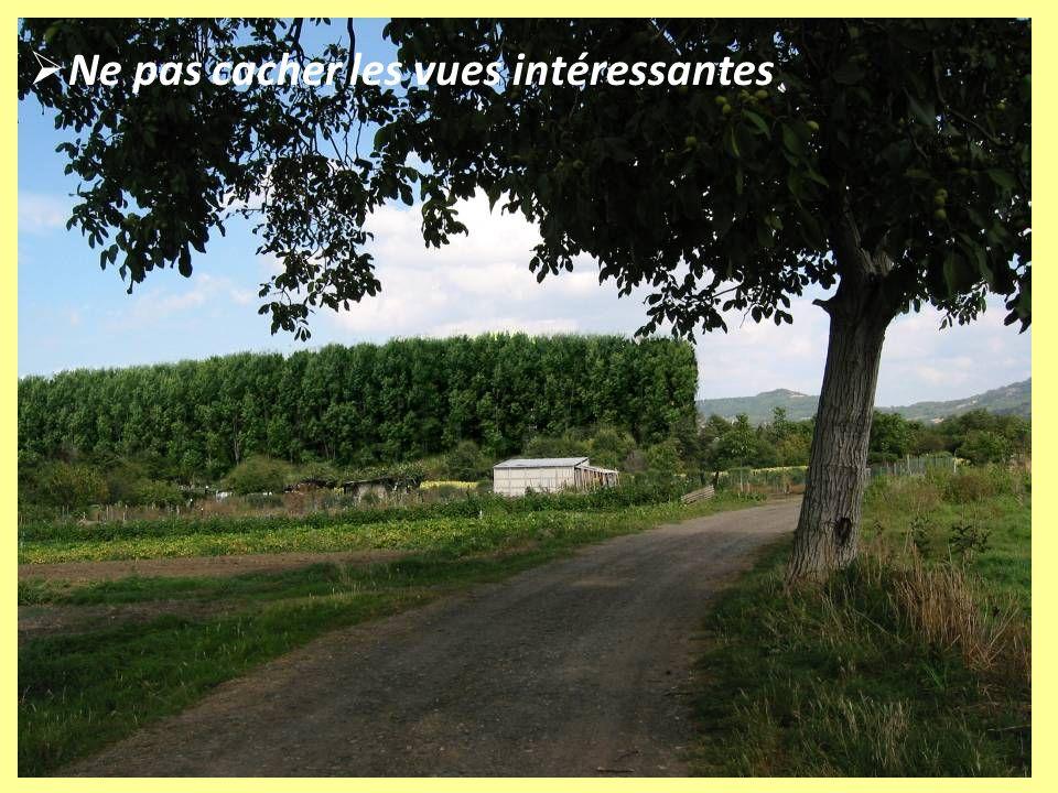 Préconisations : orientations stratégiques Importance de la végétation.