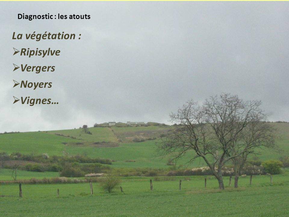 Diagnostic : les atouts La végétation : Ripisylve Vergers Noyers Vignes…