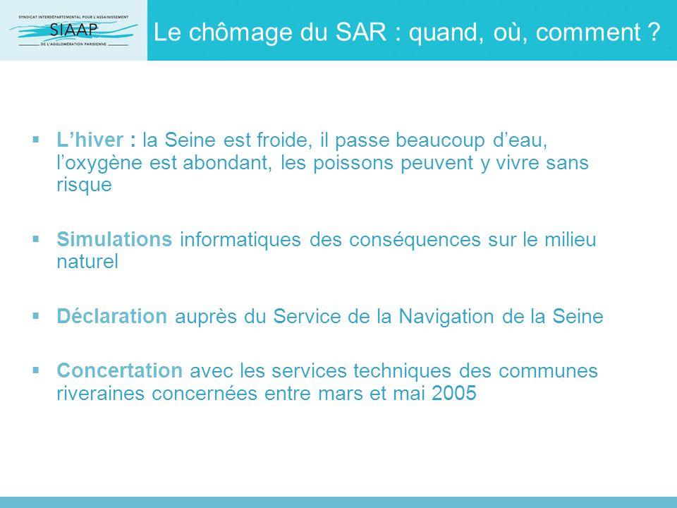 Le chômage du SAR : quand, où, comment ? Lhiver : la Seine est froide, il passe beaucoup deau, loxygène est abondant, les poissons peuvent y vivre san