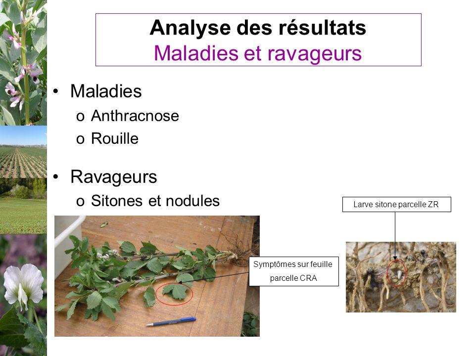 Analyse des résultats Maladies et ravageurs Maladies oAnthracnose oRouille Ravageurs oSitones et nodules Larve sitone parcelle ZR Symptômes sur feuill