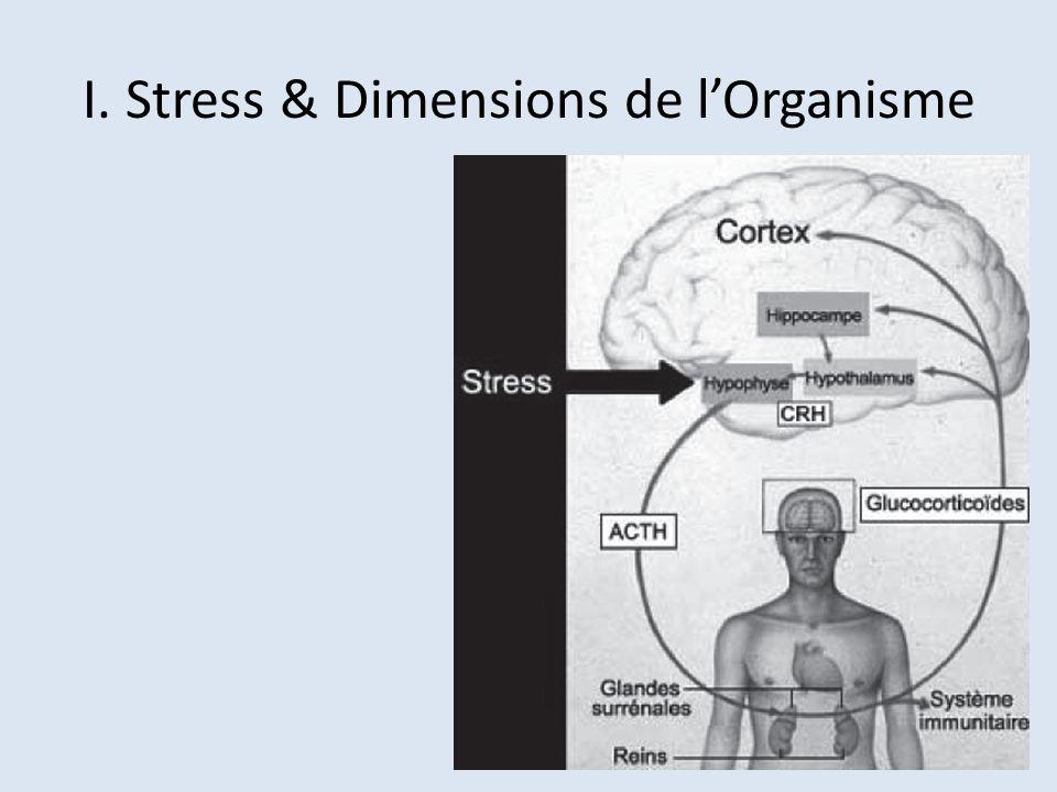 I. Stress & Dimensions de lOrganisme