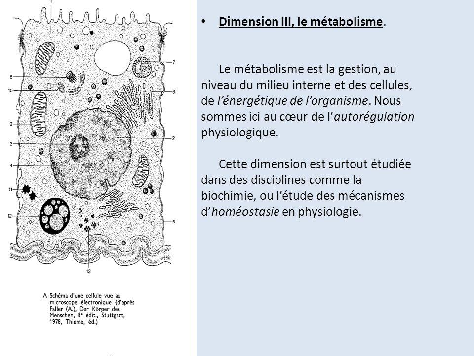 Dimension III, le métabolisme. Le métabolisme est la gestion, au niveau du milieu interne et des cellules, de lénergétique de lorganisme. Nous sommes