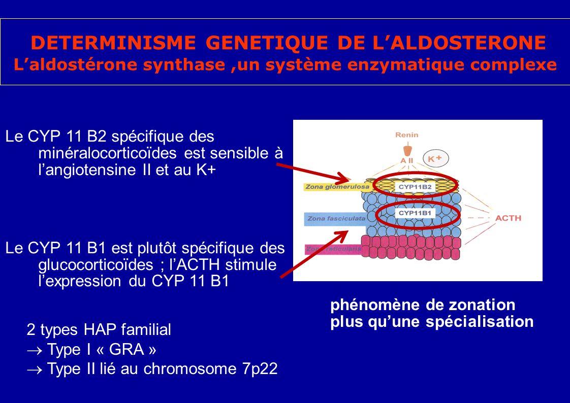 DETERMINISME GENETIQUE DE LALDOSTERONE Laldostérone synthase,un système enzymatique complexe Le CYP 11 B2 spécifique des minéralocorticoïdes est sensible à langiotensine II et au K+ Le CYP 11 B1 est plutôt spécifique des glucocorticoïdes ; lACTH stimule lexpression du CYP 11 B1 phénomène de zonation plus quune spécialisation 2 types HAP familial Type I « GRA » Type II lié au chromosome 7p22