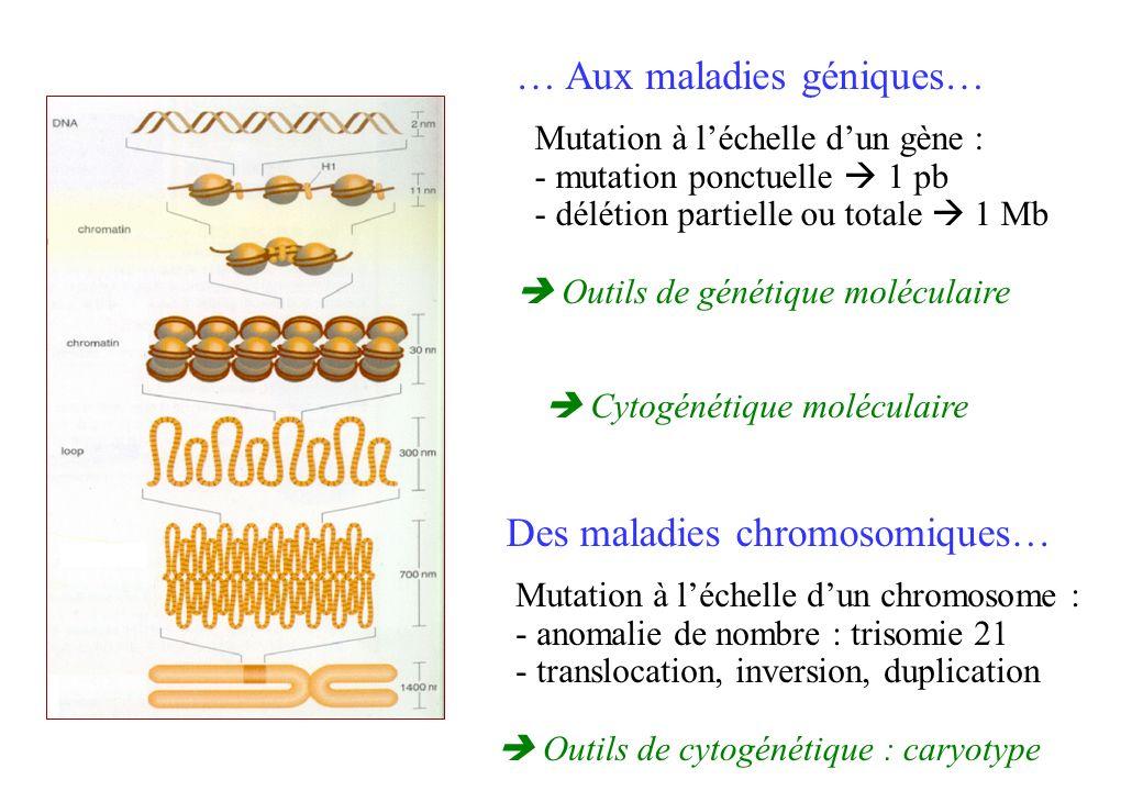 … Aux maladies géniques… Mutation à léchelle dun gène : - mutation ponctuelle 1 pb - délétion partielle ou totale 1 Mb Outils de génétique moléculaire Des maladies chromosomiques… Mutation à léchelle dun chromosome : - anomalie de nombre : trisomie 21 - translocation, inversion, duplication Outils de cytogénétique : caryotype Cytogénétique moléculaire