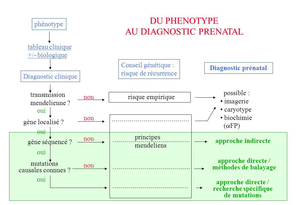 DU PHENOTYPE AU DIAGNOSTIC PRENATAL phénotype tableau clinique +/- biologique Diagnostic clinique transmission mendelienne .