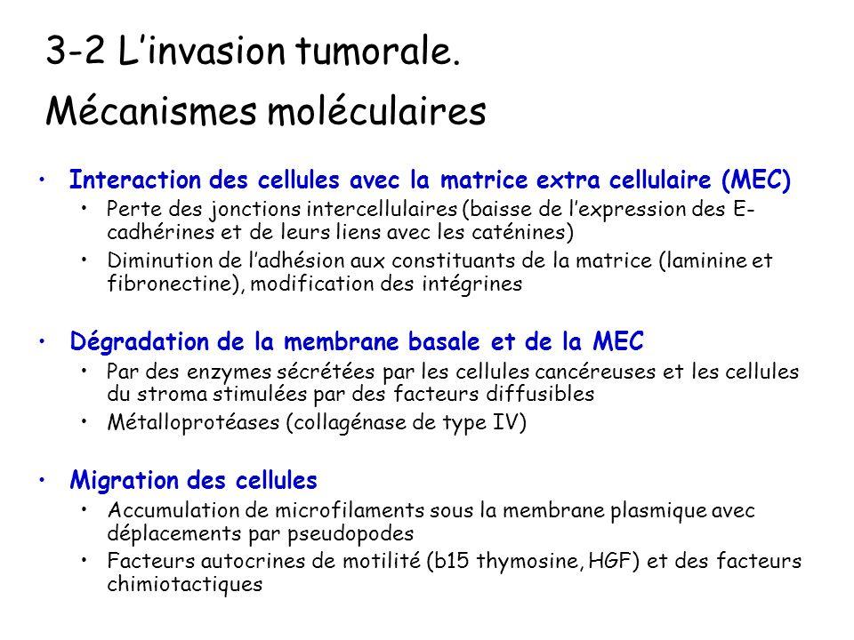 3-1 Linvasion tumorale : Définition Le carcinome infiltrant est définit par le franchissement de la membrane basale par les cellules carcinomateuses L