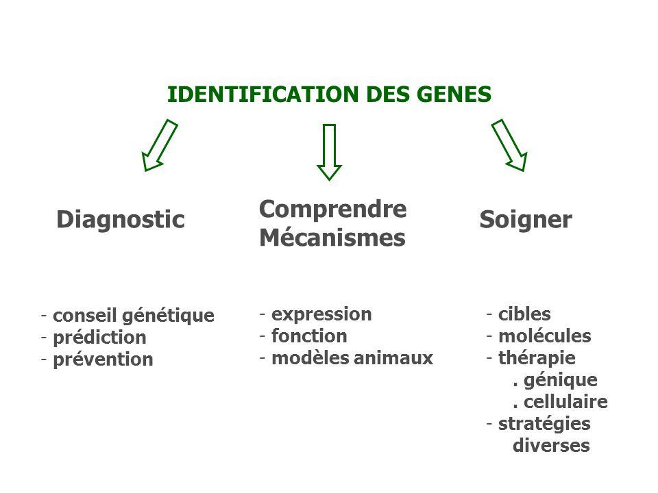 IDENTIFICATION DES GENES Diagnostic Comprendre Mécanismes Soigner - conseil génétique - prédiction - prévention - expression - fonction - modèles anim
