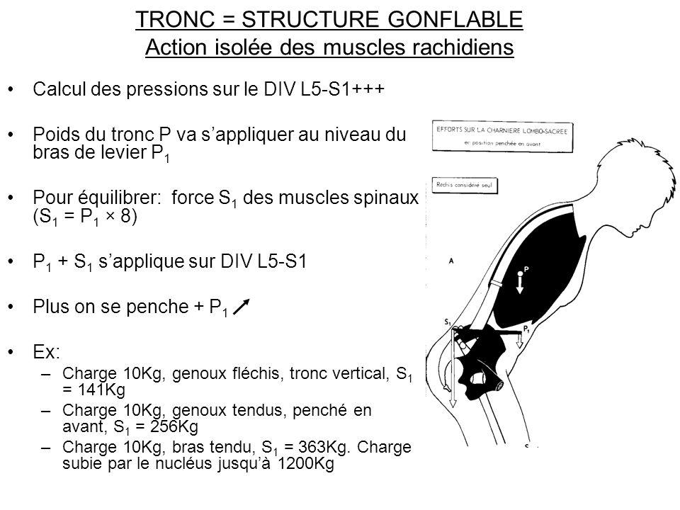 TRONC = STRUCTURE GONFLABLE Action isolée des muscles rachidiens Calcul des pressions sur le DIV L5-S1+++ Poids du tronc P va sappliquer au niveau du