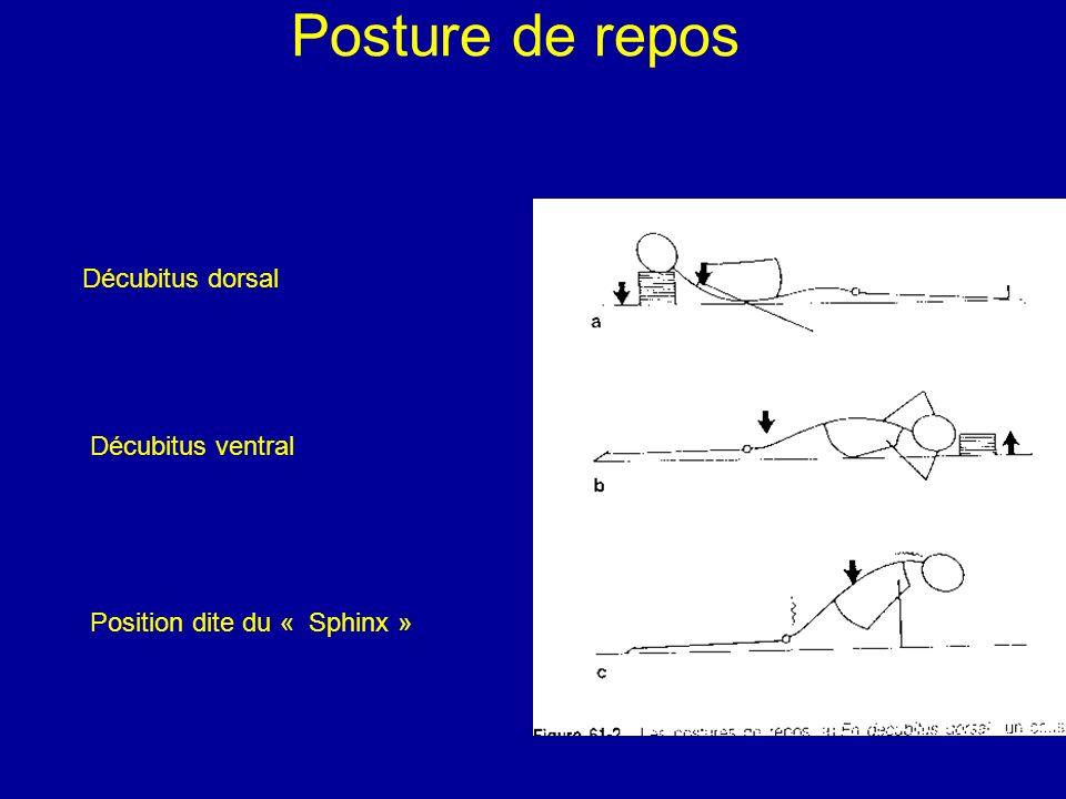 Posture de repos Décubitus dorsal Décubitus ventral Position dite du « Sphinx »