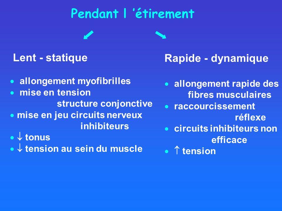 Lent - statique allongement myofibrilles mise en tension structure conjonctive mise en jeu circuits nerveux inhibiteurs tonus tension au sein du muscl
