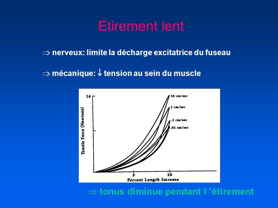 Etirement lent nerveux: limite la décharge excitatrice du fuseau mécanique: tension au sein du muscle tonus diminue pendant l étirement