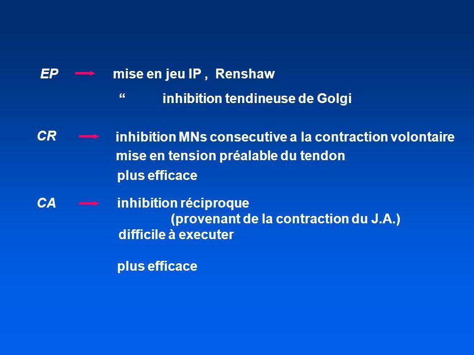 CA inhibition réciproque (provenant de la contraction du J.A.) difficile à executer plus efficace EP mise en jeu IP, Renshaw inhibition tendineuse de Golgi inhibition MNs consecutive a la contraction volontaire mise en tension préalable du tendon plus efficace CR