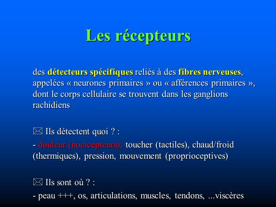 Les récepteurs des détecteurs spécifiques reliés à des fibres nerveuses, appelées « neurones primaires » ou « afférences primaires », dont le corps cellulaire se trouvent dans les ganglions rachidiens Ils détectent quoi .