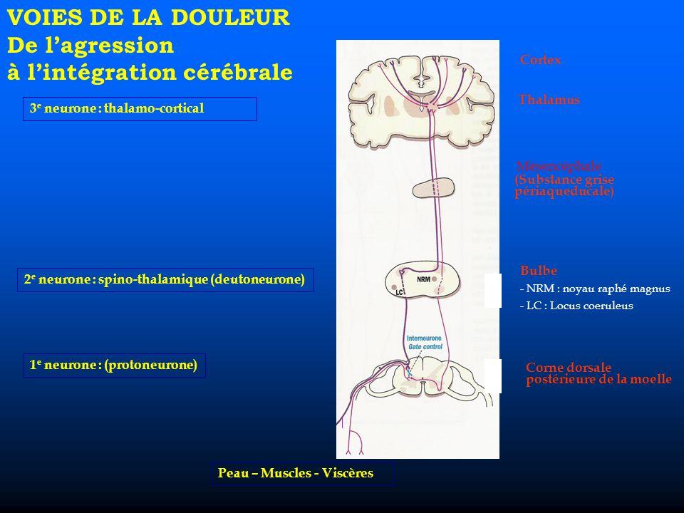 VOIES DE LA DOULEUR De lagression à lintégration cérébrale 3 e neurone : thalamo-cortical 2 e neurone : spino-thalamique (deutoneurone) 1 e neurone : (protoneurone) Peau – Muscles - Viscères Cortex Thalamus (Substance grise périaqueducale) Bulbe - NRM : noyau raphé magnus - LC : Locus coeruleus Corne dorsale postérieure de la moelle Mésencéphale