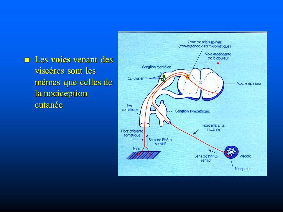 Les voies venant des viscères sont les mêmes que celles de la nociception cutanée Les voies venant des viscères sont les mêmes que celles de la nociception cutanée