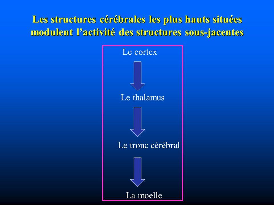 Les structures cérébrales les plus hauts situées modulent lactivité des structures sous-jacentes Le cortex Le thalamus Le tronc cérébral La moelle