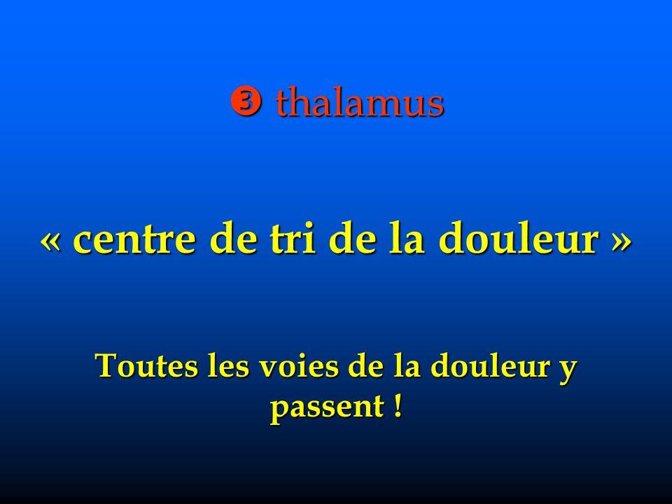 thalamus thalamus « centre de tri de la douleur » Toutes les voies de la douleur y passent !