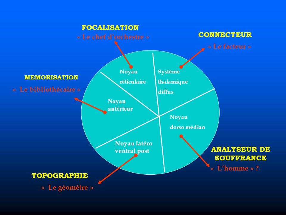 Noyau antérieur Noyau latéro ventral post Noyau réticulaire Système thalamique diffus Noyau dorso médian FOCALISATION « Le chef dorchestre » CONNECTEUR « Le facteur » ANALYSEUR DE SOUFFRANCE « Lhomme » .
