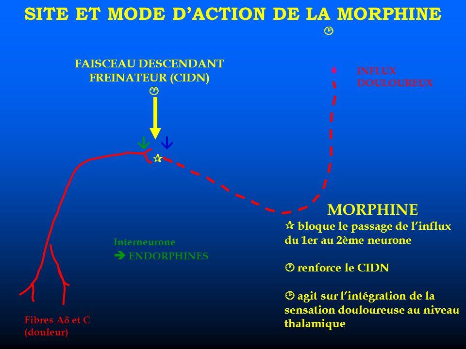 Fibres A et C (douleur) INFLUX DOULOUREUX FAISCEAU DESCENDANT FREINATEUR (CIDN) Interneurone ENDORPHINES SITE ET MODE DACTION DE LA MORPHINE MORPHINE bloque le passage de linflux du 1er au 2ème neurone renforce le CIDN agit sur lintégration de la sensation douloureuse au niveau thalamique