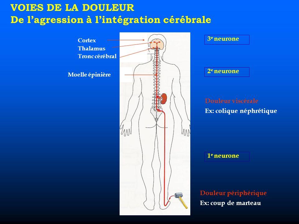 VOIES DE LA DOULEUR De lagression à lintégration cérébrale 3 e neurone 2 e neurone 1 e neurone Douleur viscérale Ex: colique néphrétique Douleur périphérique Ex: coup de marteau Cortex Thalamus Tronc cérébral Moelle épinière