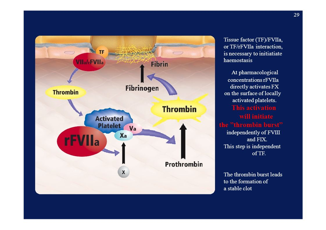 Tissue factor (TF)/FVIIa, or TF/rFVIIa interaction, is necessary to initiatiate haemostasis At pharmacological concentrations rFVIIa directly activates FX on the surface of locally activated platelets.