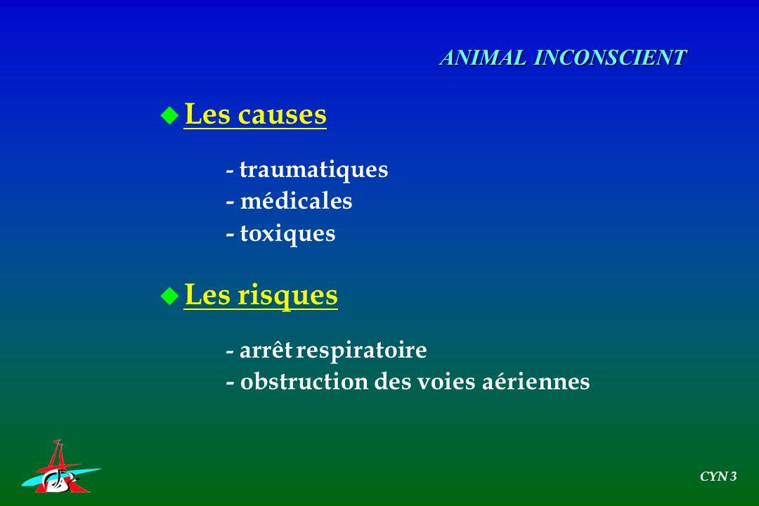 u Les causes - traumatiques - médicales - toxiques u Les risques - arrêt respiratoire - obstruction des voies aériennes ANIMAL INCONSCIENT CYN 3