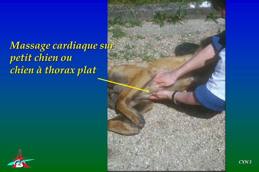 Massage cardiaque sur petit chien ou chien à thorax plat CYN 3