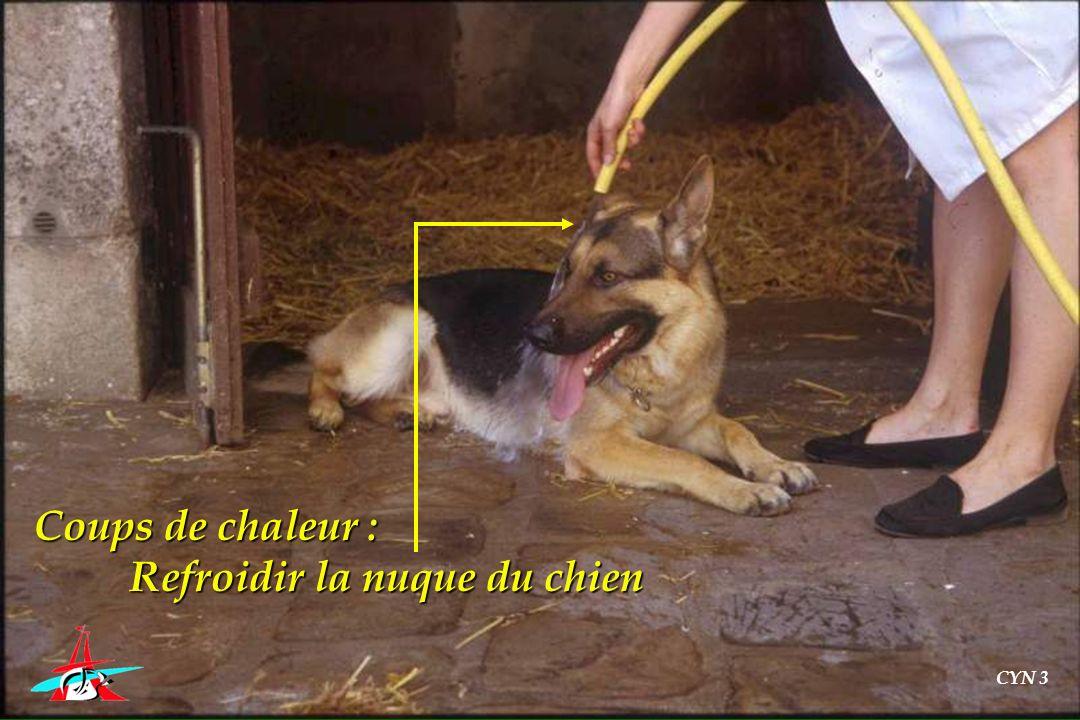 Coups de chaleur : Refroidir la nuque du chien CYN 3